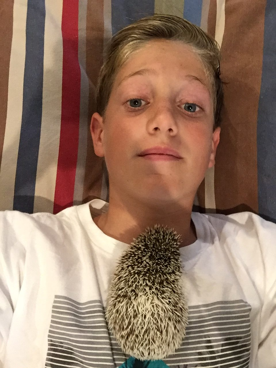 Carter Cohen, a boy from Coronado, California, who convinced his parents to let him buy a hedgehog by preparing a slide presentation